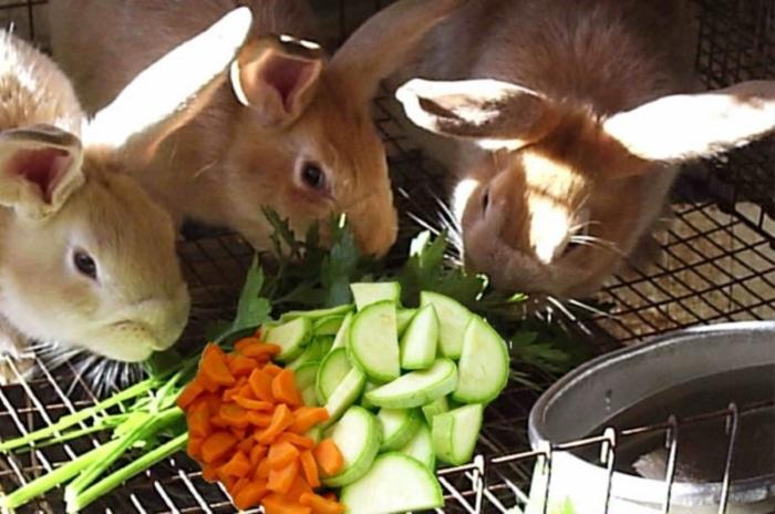 кролики рацион