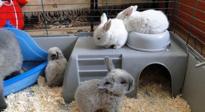 крольчата, клетка
