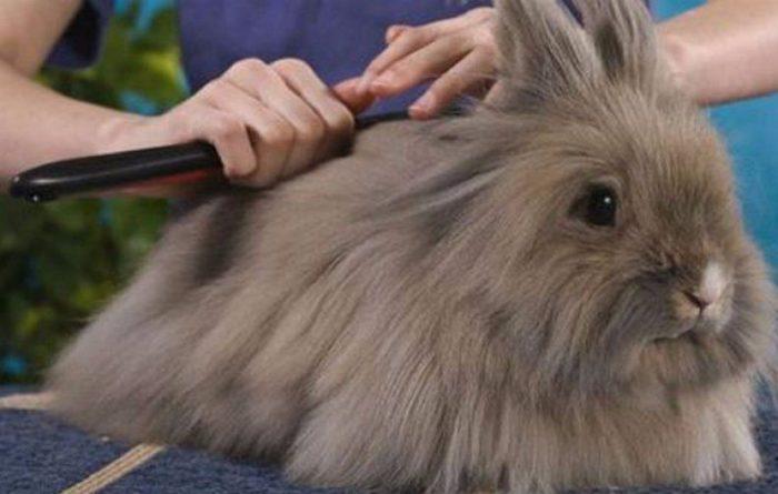 кролик расчесывание