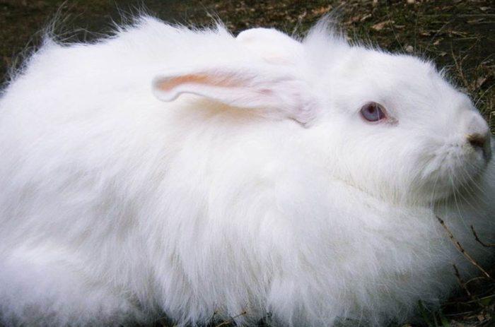 белый пуховый кролик
