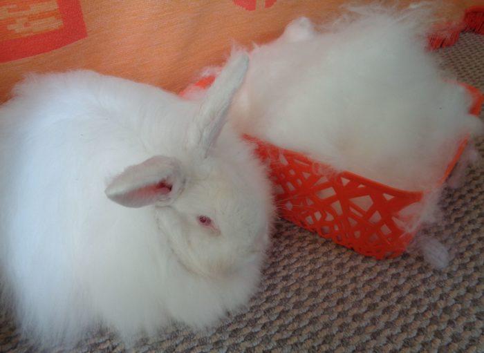 кролик пух