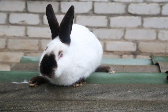 кролик на крыше