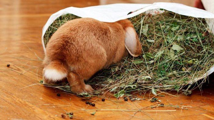 кролик ризен сено