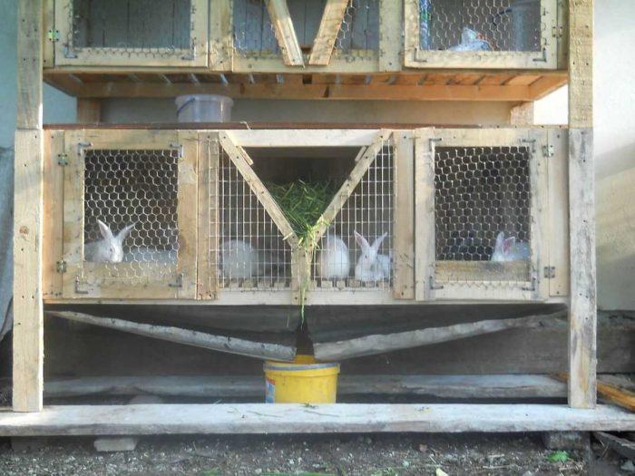 кролики клетка