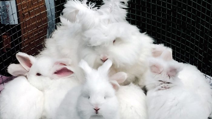Семейство кроликов