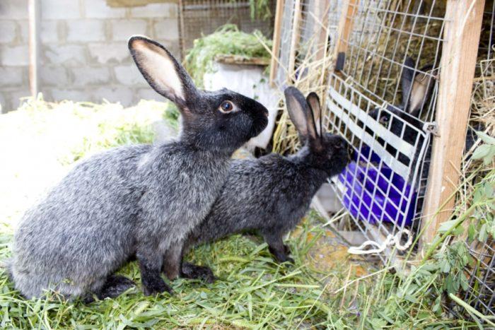 кролики трава