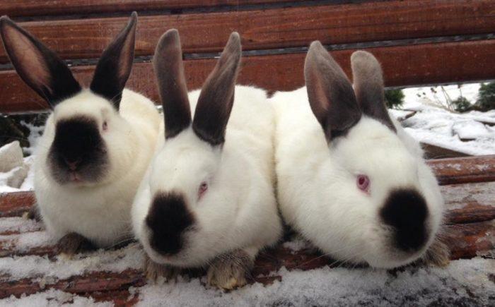кролики снег