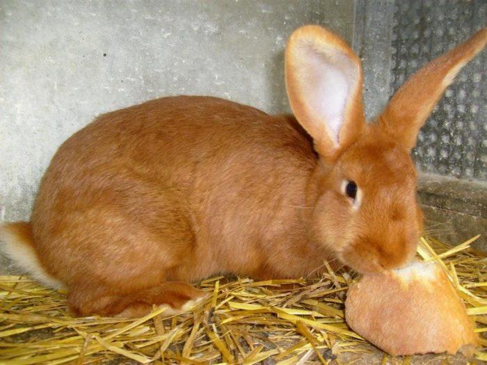Бургундский кролик рацион
