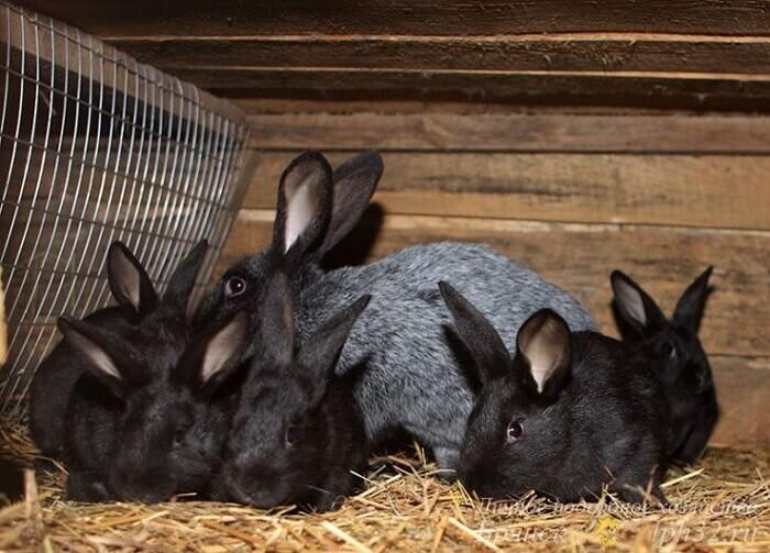 клетка кролики