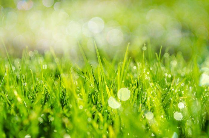 сезонная трава
