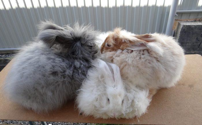 пуховые кролики