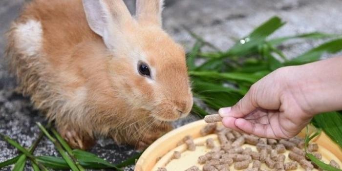 кролик есть альбен
