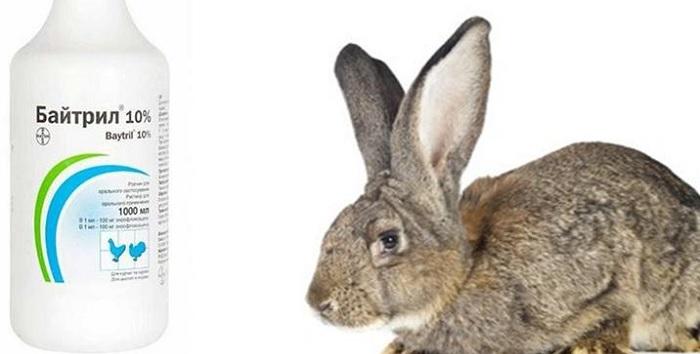 кролик и флакон
