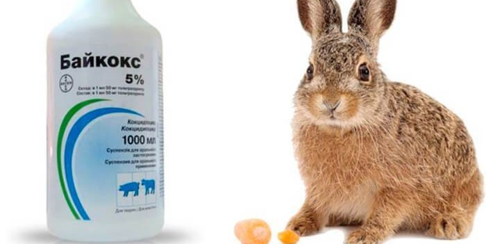 байкокс и кролик