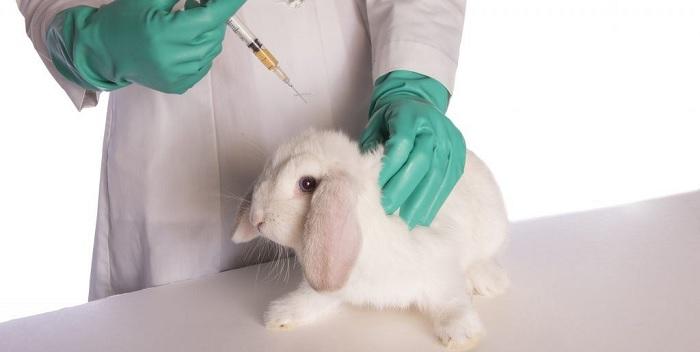 делать укол кролику