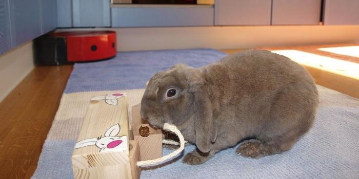 кролик дамашний