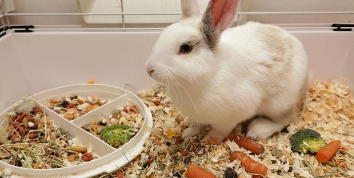 еда для кролика