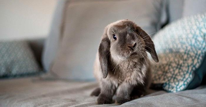 кролик на диване