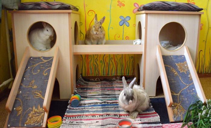 Домик для карликового кролика