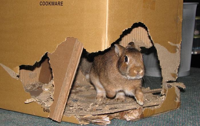 Картонный домик для кролика