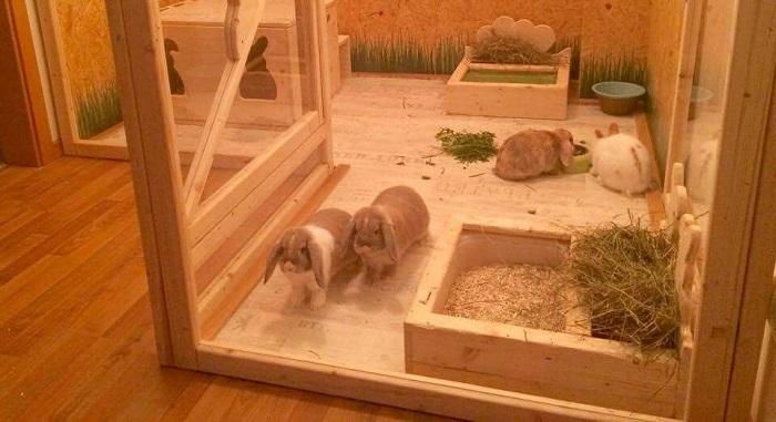 Домики для домашних кроликов