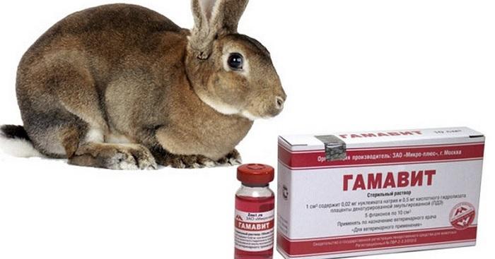 серый кролик и гамавит