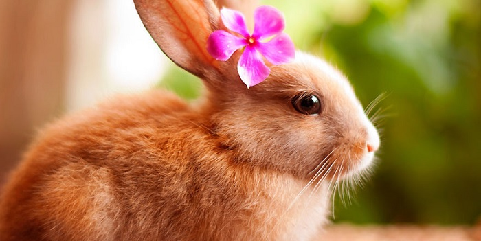 кролик девочка