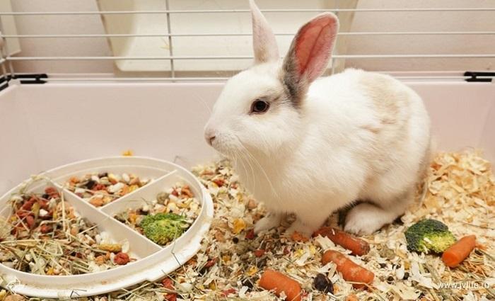 Еда для кроликов домашних
