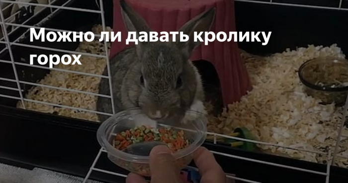 Кролик в горошек