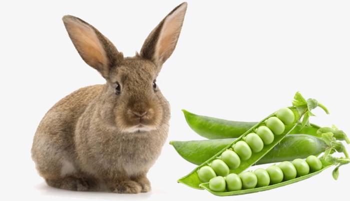 горох и кролик