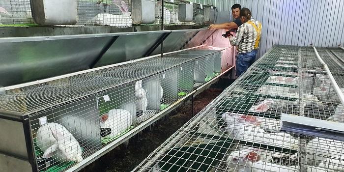 чистые шеды с кроликами