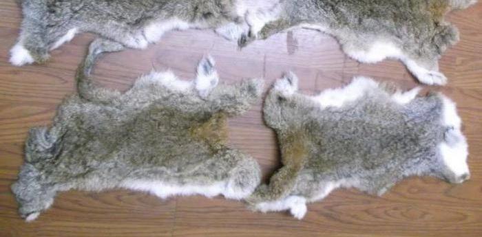 серые шкуры кролика