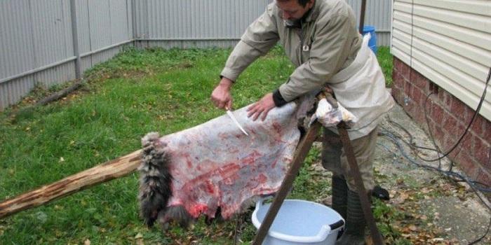 как удалить мясо со шкуры