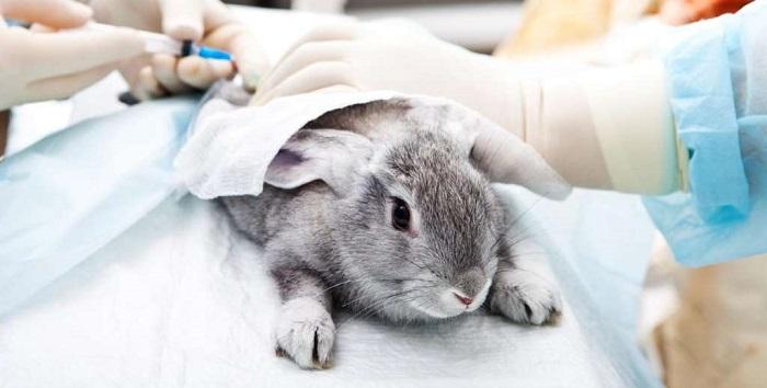 кролику делаюи прививку