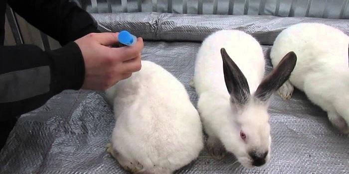 два кролика и укол