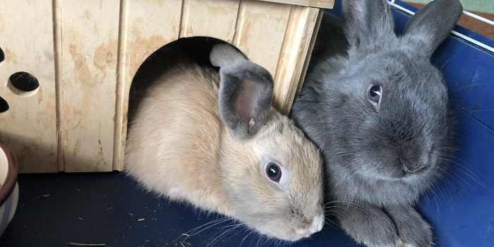 кролик в домике