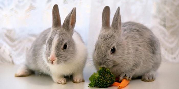 два кролика декоративных