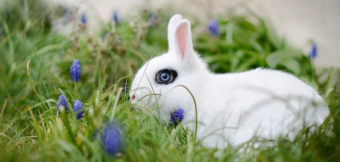 черыный глаз у кролика