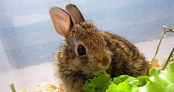 кролики и зелень
