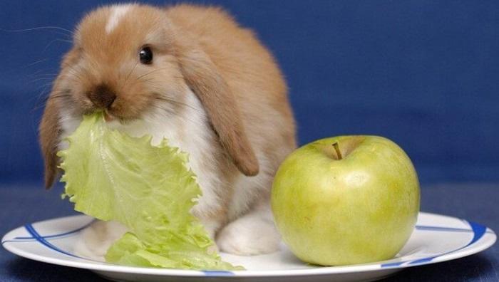 яблоко и зелень