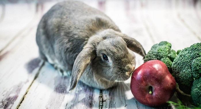 серый кролик и яблоко