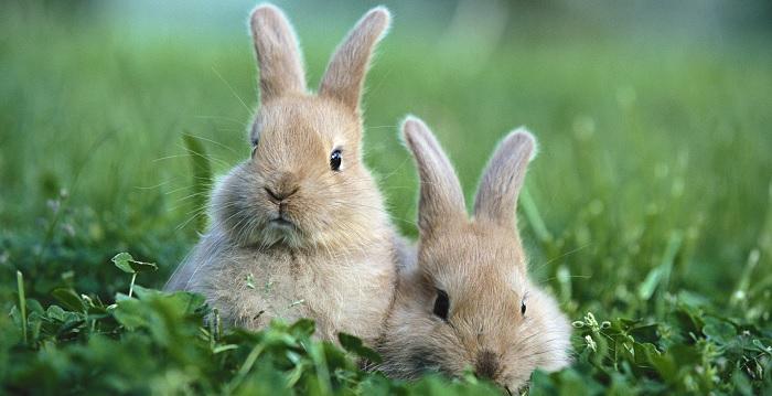 2 кролика на траве