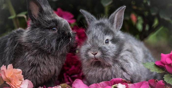 кролики и цветы
